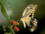 butterfly11_480x360