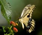 butterfly11_960x800