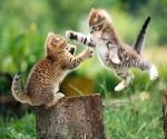 Cats_960x800