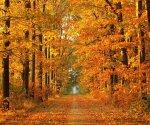 Fall_1_960x800