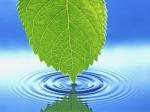 leaf-wallpaper_480x360