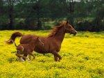 running_horses_480x360