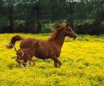 running_horses_960x800