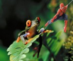 Spider_Frog_960x800