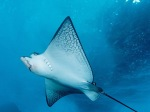 underwater-fish-wallpaper_480x360