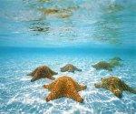 underwater_6_960x800