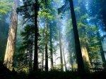 vista-wallpaper-aero-woods_480x360