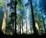 vista-wallpaper-aero-woods_960x800